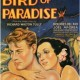 bird-of-paradise-free-movie-online-192x300